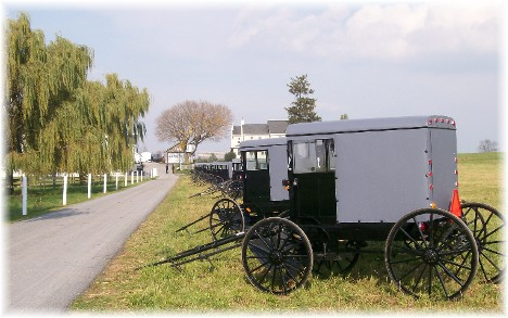 Parked buggies at Amish wedding