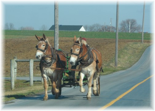 Amish work team in Lancaster County PA 3/13/13