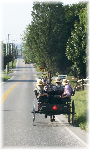 Amish youth in open cart, Lancaster County, PA 9/2/10