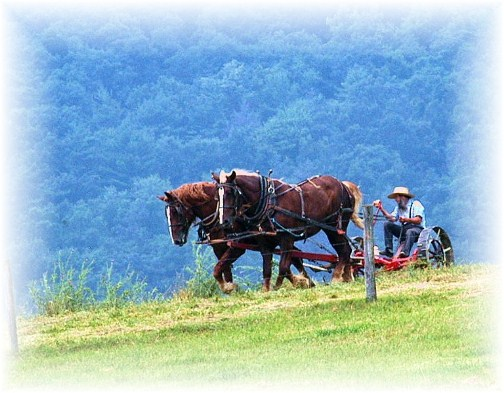 Belleville PA amish man plowing