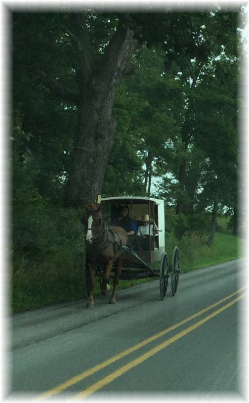 Big Valley horse and buggy
