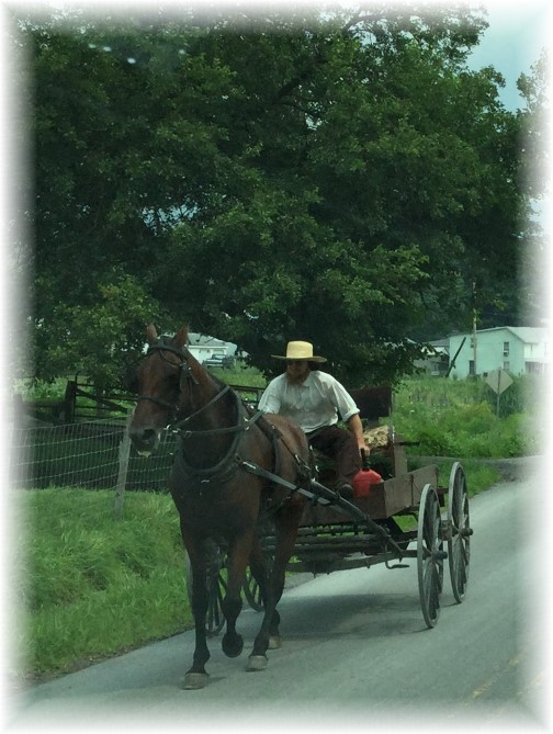Amish horse and open cart
