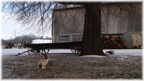 Collie and wagon on Amish farm in southern Lancaster County PA 2/27/15