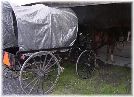 Conestoga wagon style buggy