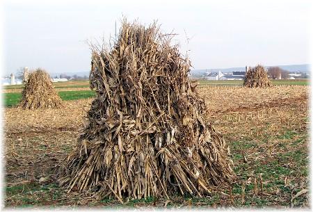 Wenger Mennonite corn shocks