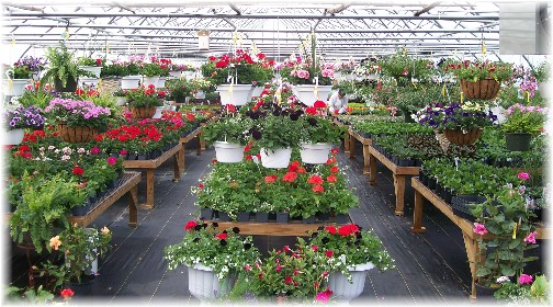 Creekside greenhouse (interior) 5/7/11