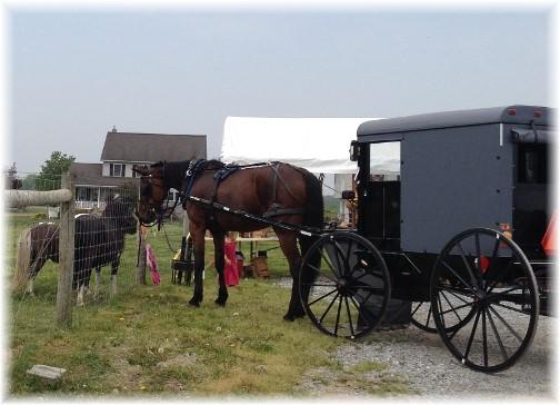 Friendly horses 5/16/15