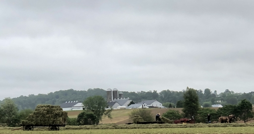 Amish hay harvest, Lancaster County, PA