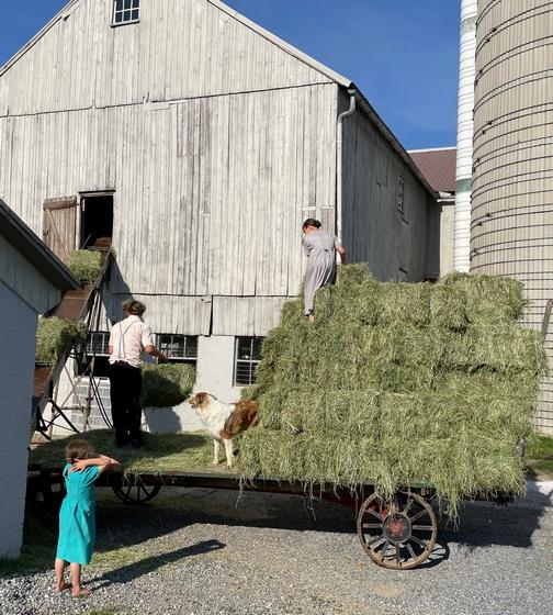 Hay work 5/20/21