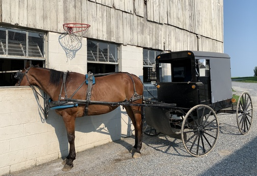 Horse and buggy parked near barn