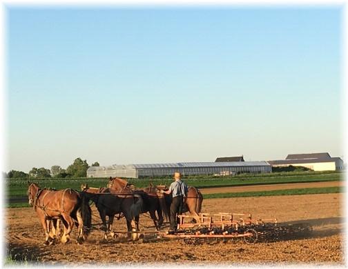 Amish work team on Kraybill Church Road 6/1/17