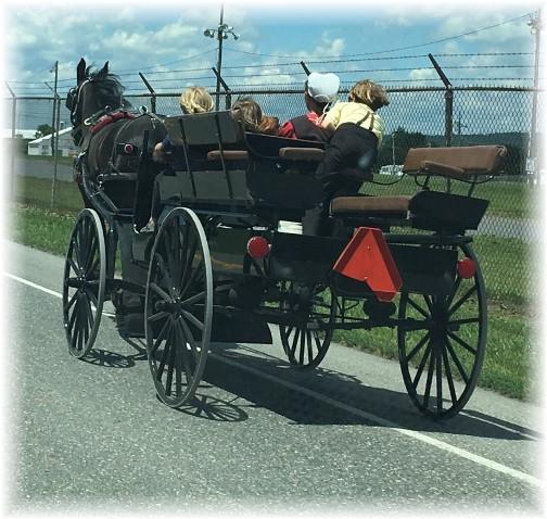 Amish spring wagon near Gratz, PA 6/20/17