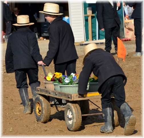 Amish boys helping at a mud sale, Lancaster County PA (Photo by Doris High)