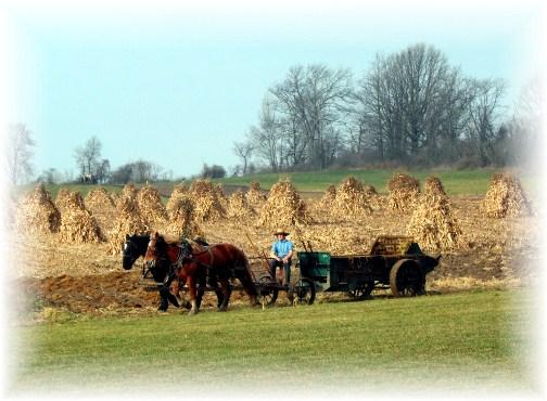 Nebraska Amish in New York