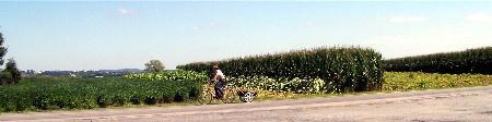 Lancaster fields 9/3/09