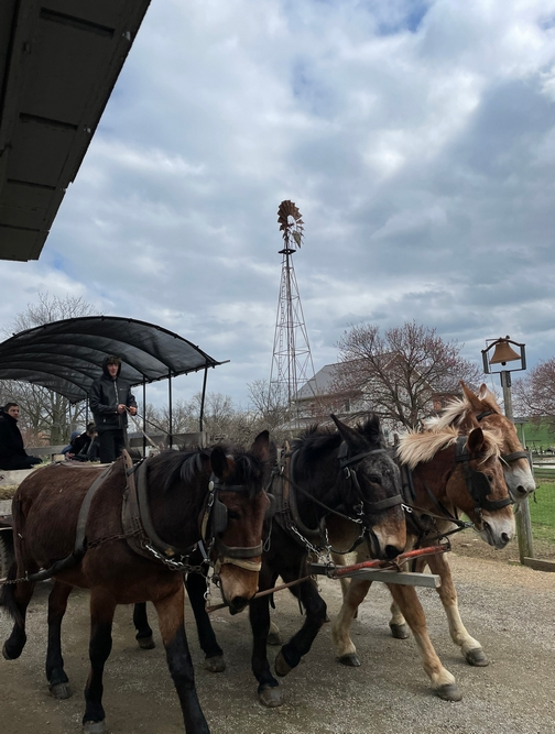 Old Windmill Farm wagon ride