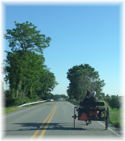 Amish open cart near Mount Joy, PA 6/14/14