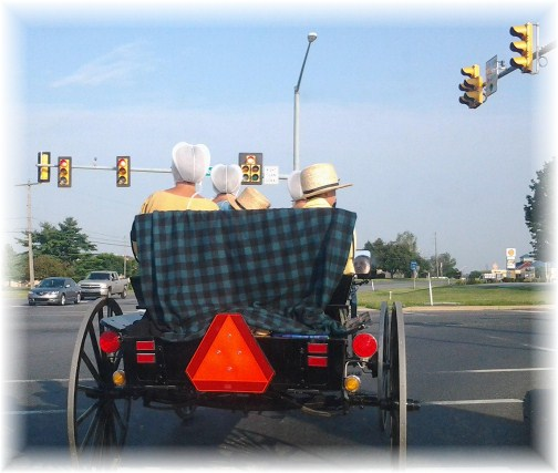Amish open cart, Lancaster County PA