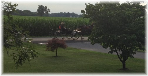 Amish open cart, Kraybill Church Road in Lancaster County PA 7/18/14