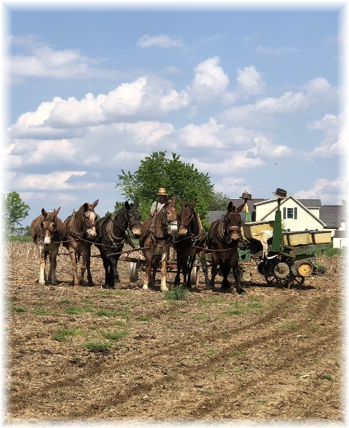 Planting corn 5/8/18