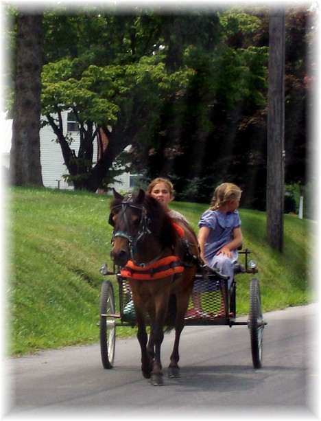 Pony cart ride 7/29/10
