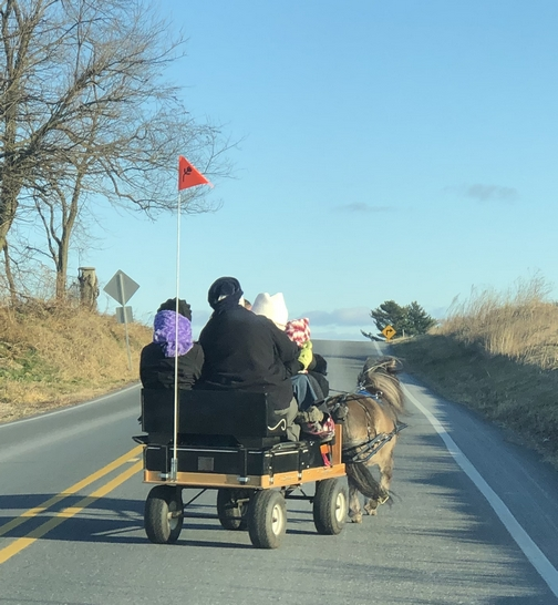 Amish small cart pulled by pony12/19/19