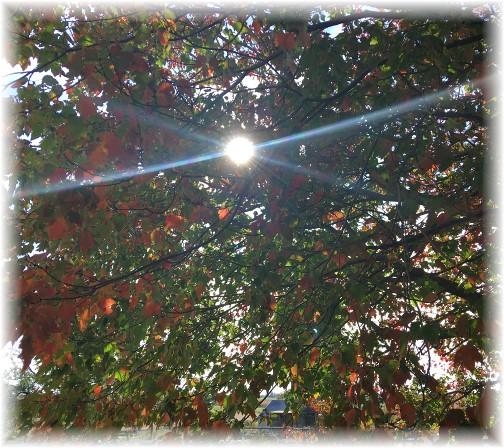 Sun shining through tree 10/22/17