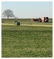 Amish team making hay