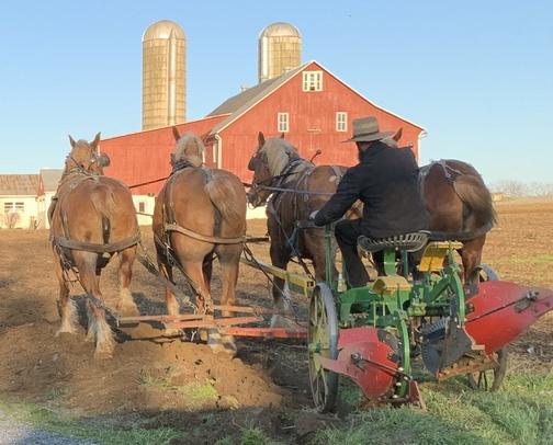Amish farmer plowing