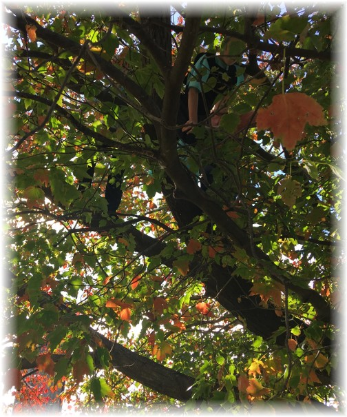 Three kids in tree 10/22/17