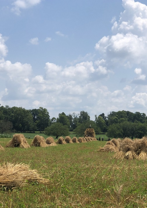 Wheat harvest 7/4/19 (Click to enlarge)