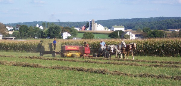 photo of Amish harvest