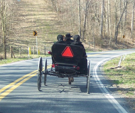 Amish open buggie