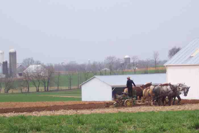 Amish plowing with team