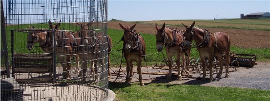 Amish work team