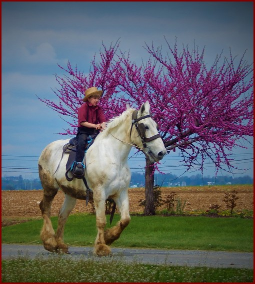 Amish boy on horse (Ester) Click to enlarge
