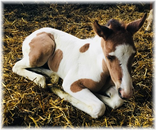Baby horse 4/3/18 (Photo by Ester)