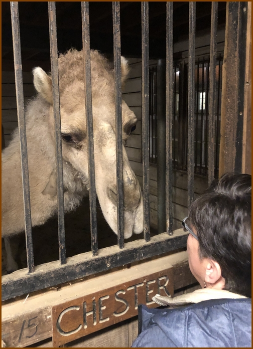 Brooksyne with Sight and Sound camel 3/16/19