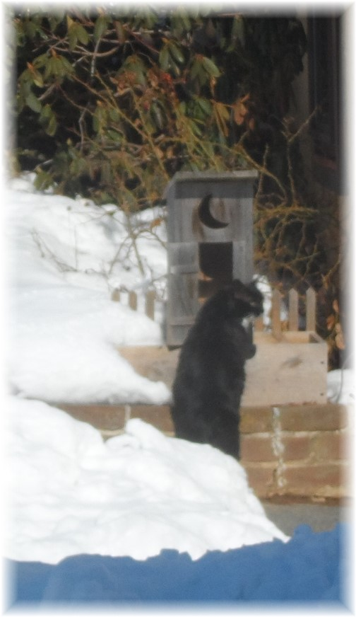 Cat looking at outhouse 2/17/14