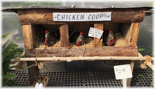 Chicken Coop in greenhouse 6/15/18