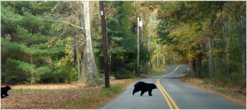 Connecticut bears 10/13/12