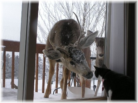 Deer and cat (Photo by Marilyn Thornbery)