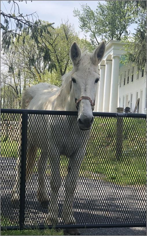 Horse at Donegal Plantation 5/10/20