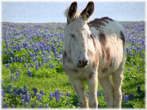 daily donkey: