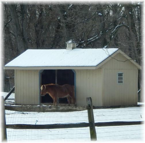 Donkey in snow 2/18/18