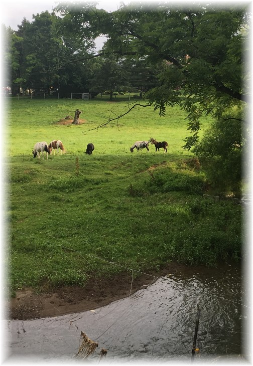Donkeys in Lebanon County pasture