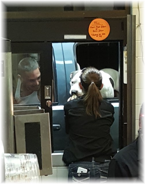 Dog in drivethru 7/7/16