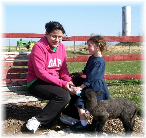 Ester feeding lamb 3/13/12