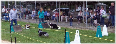 Dog races at Falmouth PA
