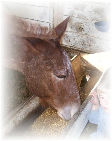Feeding horse 3/18/11